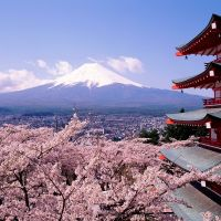 Beautiful Cherry Blossoms and mount Fuji Japan