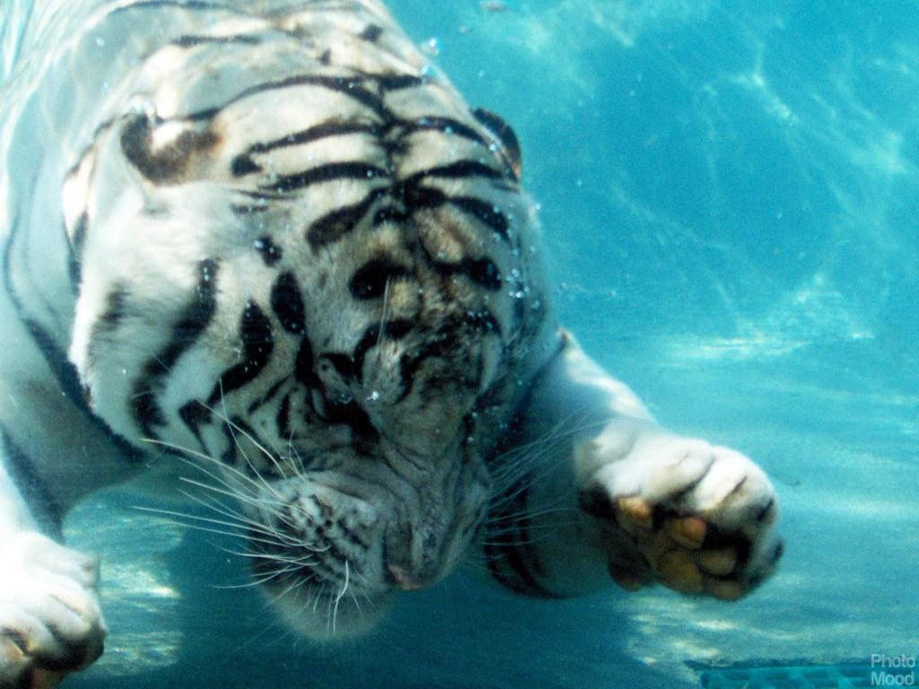 Animals photo mood - Aquatic wallpaper ...